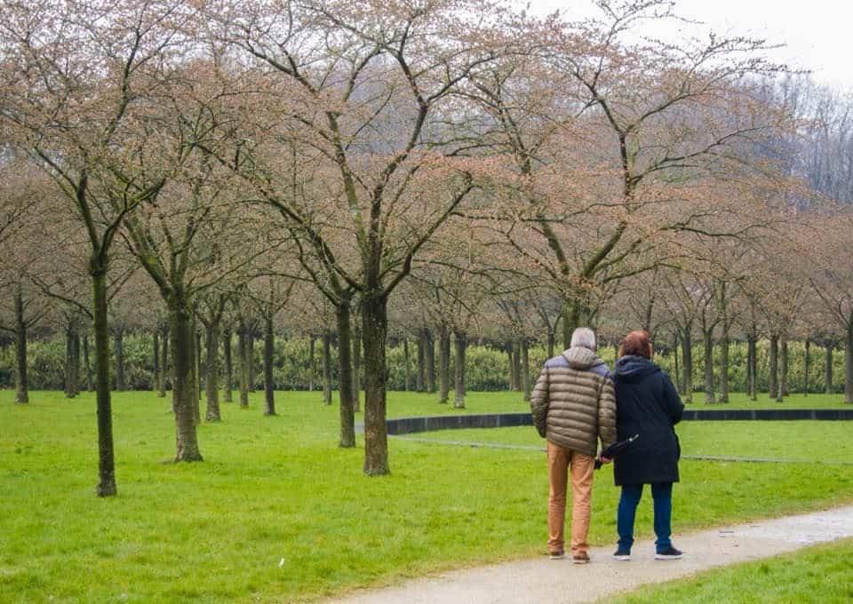 parque das cerejeiras da holanda em amstelveen, cidade proxima a amsterdam, na holanda. situaçao das flores de cerejeira no momento