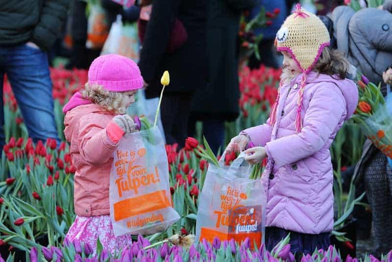 Dia da Tulipa na Holanda: crianças colocam tulipas nas suas sacolas