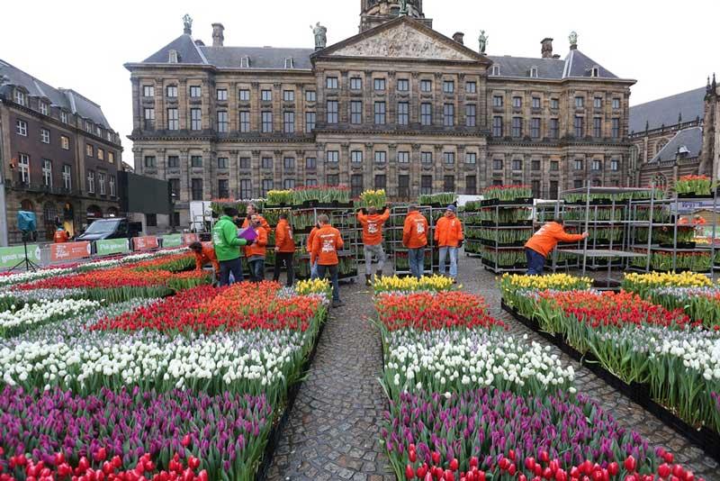 Organização do jardim das tulipas na Praça Dam em Amsterdam durante o Dia Nacional da Tulipa