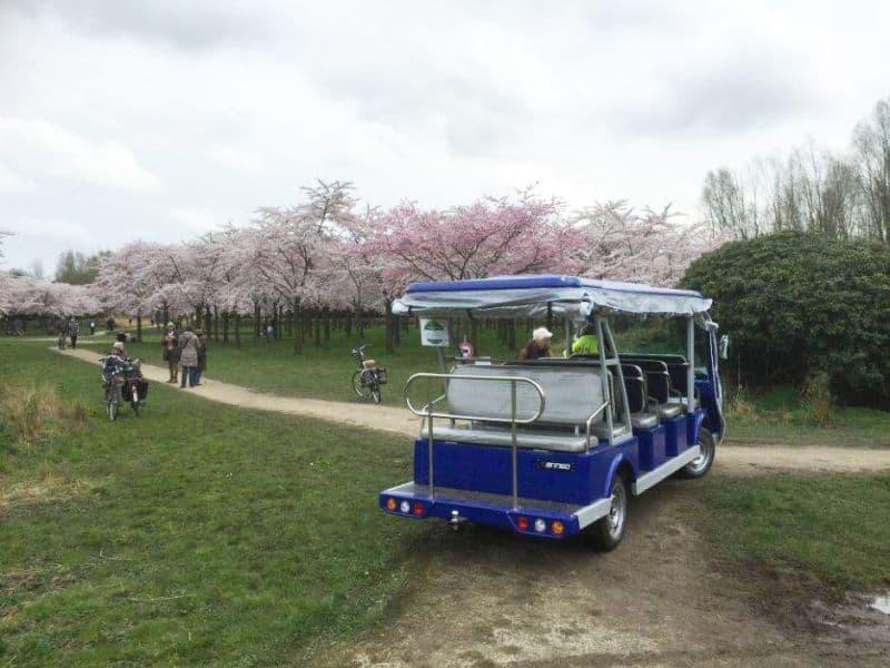 Bosbus, o micro-ônibus do Amsterdamse Bos em frente ao Jardim das Cerejeiras de Amstelveen, cidade próxima a Amsterdam, na Holanda