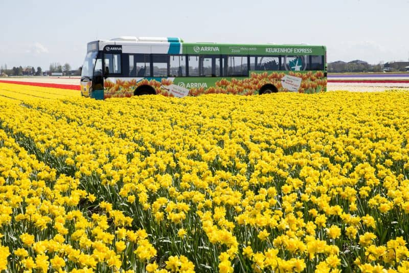 Como chegar ao Keukenhof com o Keukenhof Express que passa pelos campos de tulipas