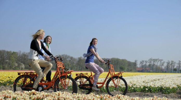 Passeio de Bicicleta pelos campos de tulipa próximos ao Keukenhof na Holanda