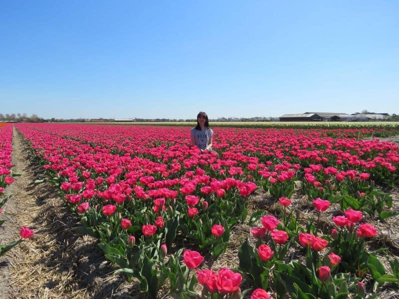 Campo de tulipas cor de rosa. Como se posicionar pra tirar foto.