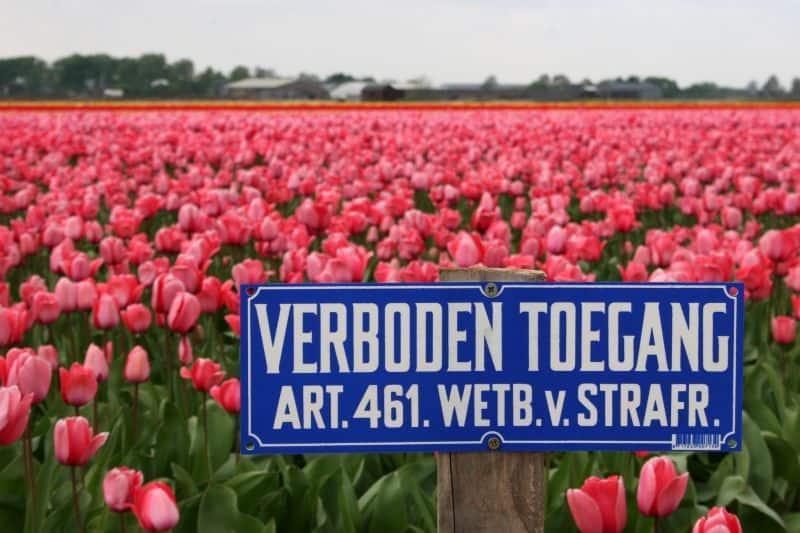 Campo de tulipas na holanda com placa em holandês de entrada proibida