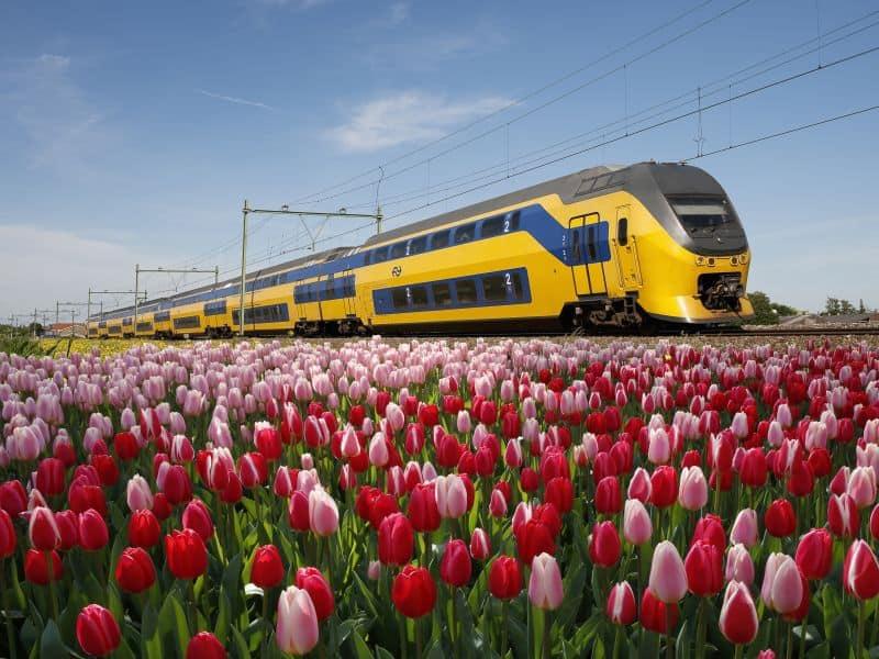 Trem passando pelos campos de tulipas na Holanda