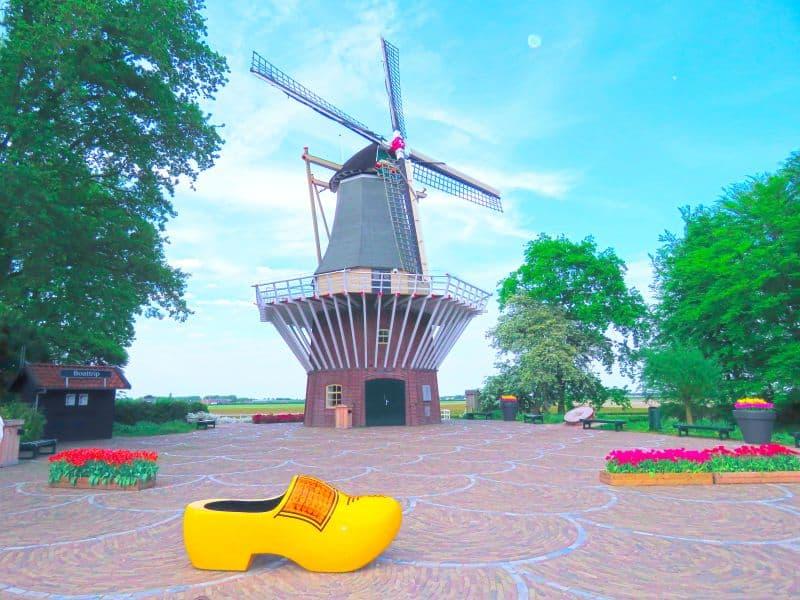 Moinho Keukenhof acompanhando de tamanco holandês e tulipas