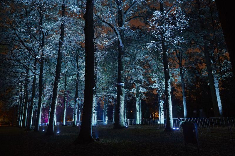 Projeção de luzes em árvores no Festival Glow Eindhoven, na Holanda
