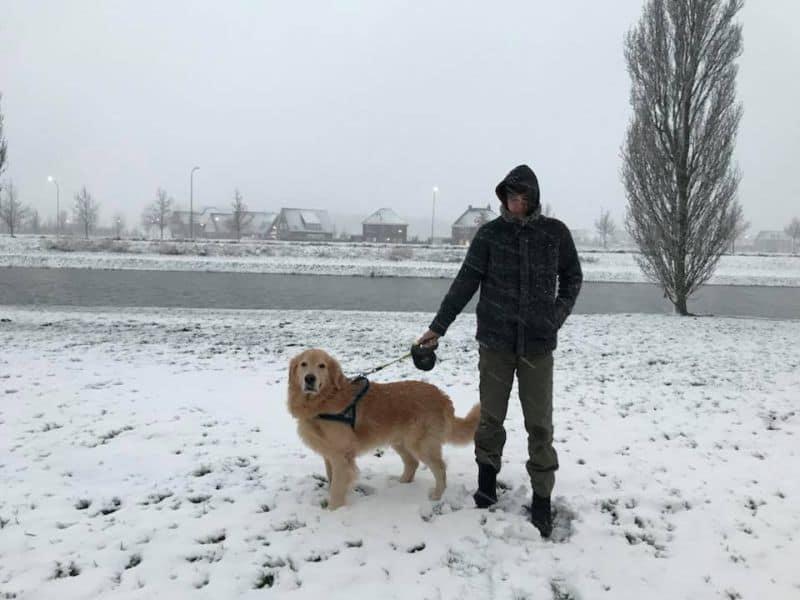 Neve na cidade de Lelystad, na Holanda. A brasileira Joyce passeia com seu cachorro golden retriever, Thor, na neve