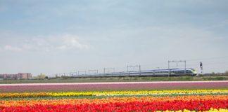 Trem da Eurostar saindo de Londres com destino a Amsterdam passando pelos campos de tulipas da Holanda