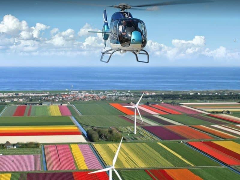 helicóptero voa sobre os campos de tulipa na Holanda, com visão aérea e panorâmica dos campos de tulipas