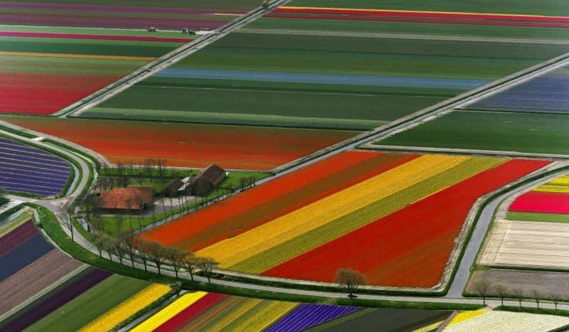 Campos de tulipas na Holanda vistos de cima durante passeio de helicóptero