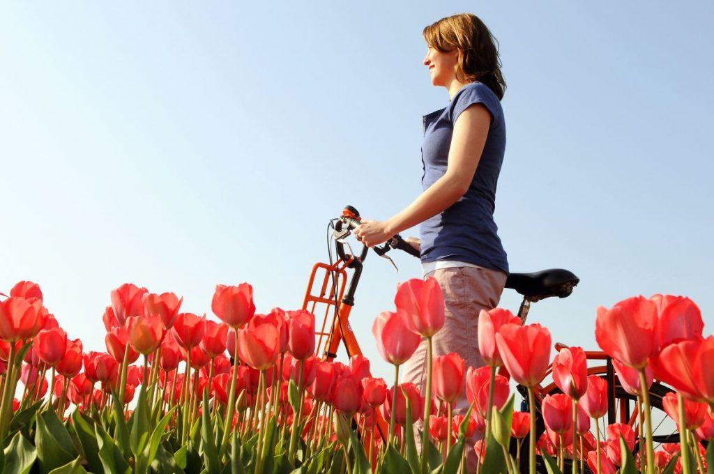 mulher pedala de bicicleta para passear pelos campos de tulipas próximo ao keukenhof