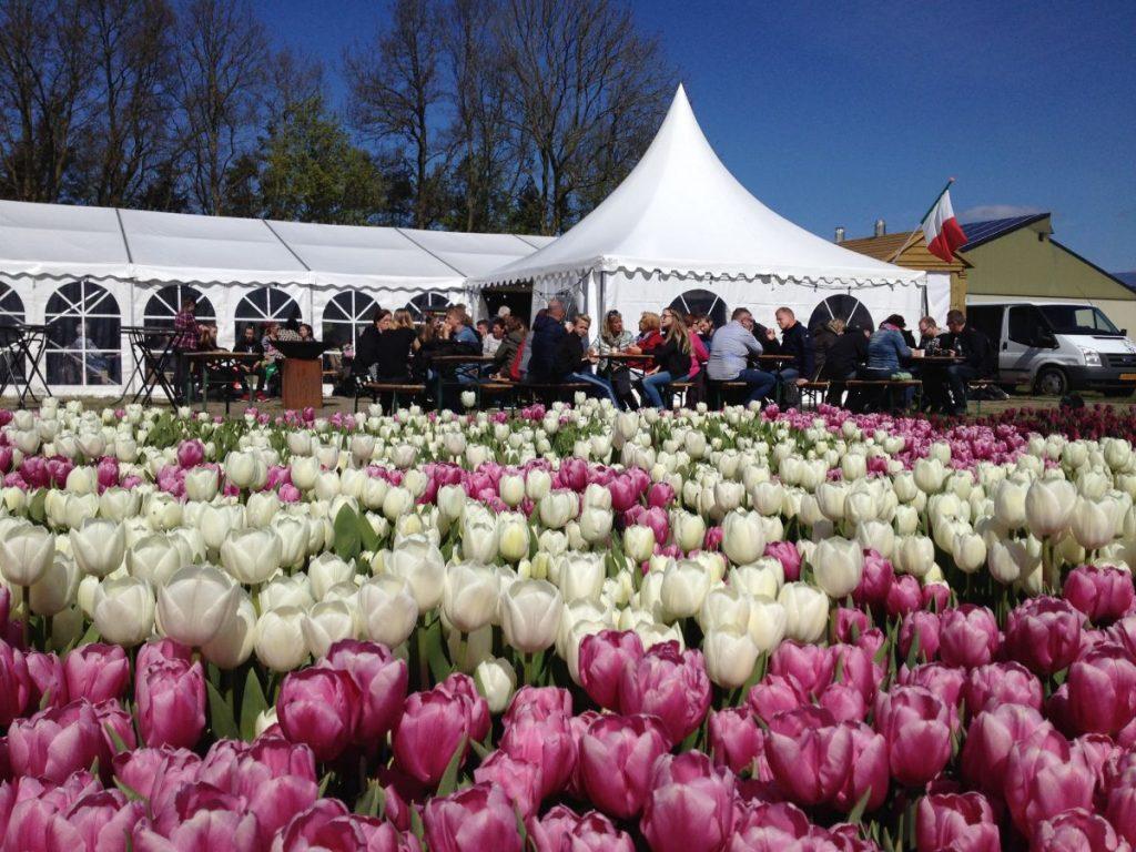 campo de tulipas em frente ao café temporário no noordoostpolder, onde fica a maior rota de tulipas do mundo