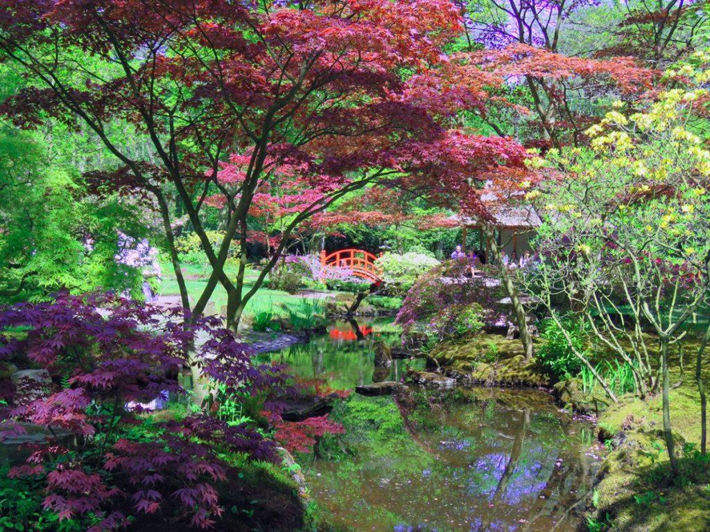 jardim japonês de haia, na holanda, durante a primavera