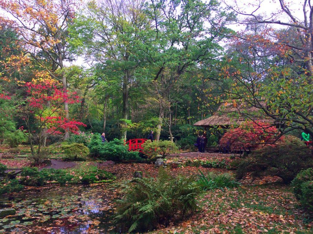 Jardim Japonês de Haia, na Holanda, no outono, com folhas vermelhas e caídas pelo chão