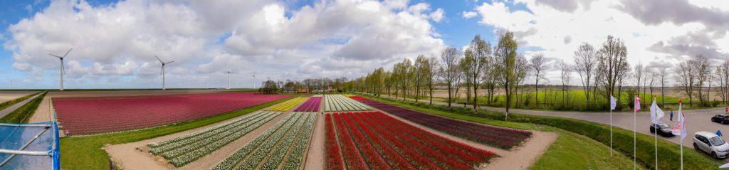 Panorâmica com Campo de tulipa de 6 mil metros quadrados que reproduz um quadro do pintor holandês Mondrian. O campo fica em Noordoostpolder, na Holanda, na maior rota de campos de tulipas do mundo