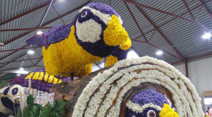 Carros de flores com pássaros sendo montados para a Parada das Flores do Keukenhof, na Holanda